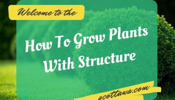 How To Grow Plants With Structure