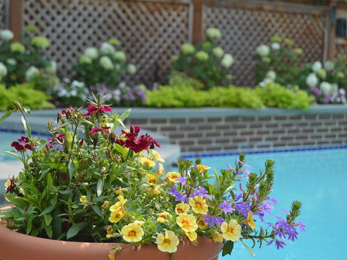 Landscaping Flower Design