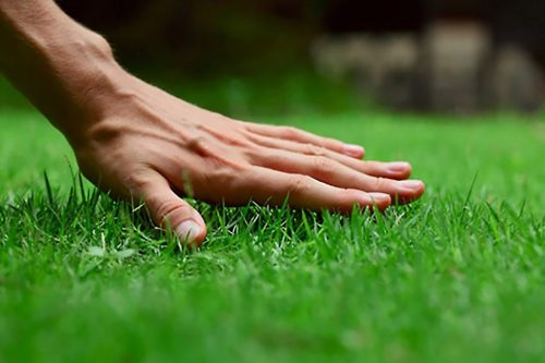 Lawn care landscaping business