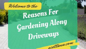 Reasons For Gardening Along Driveways