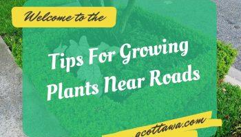 Tips For Growing Plants Near Roads
