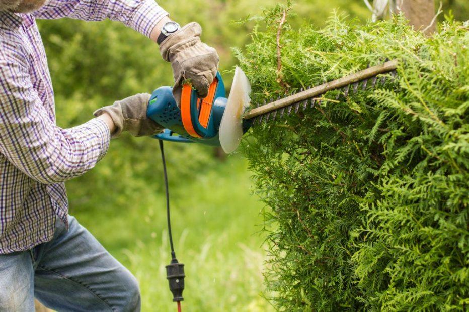 trimming bushes